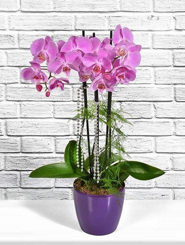 Lila Orkide ve Sevimli Ayıcık