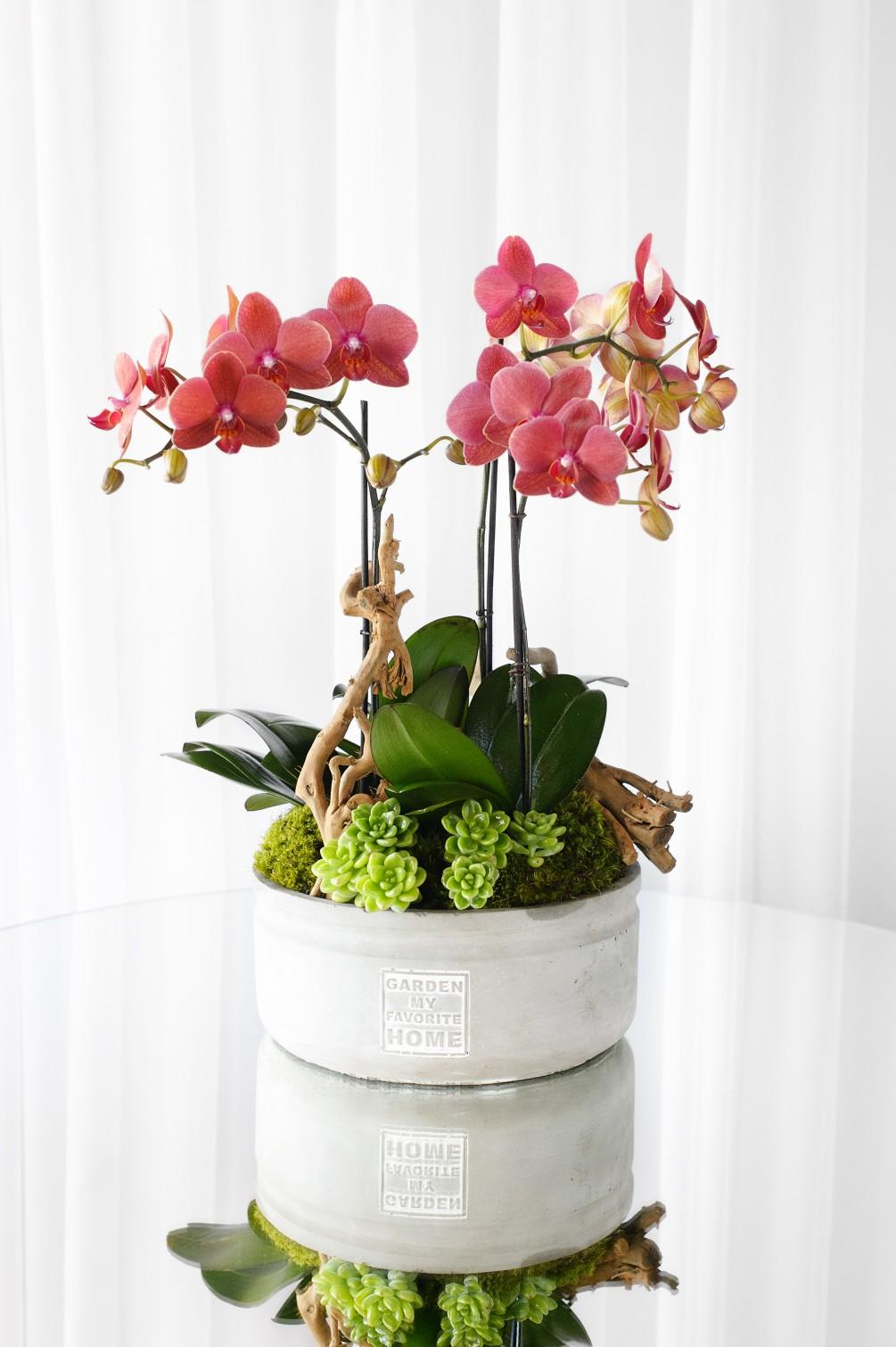 2 Dal Pembe Orkide