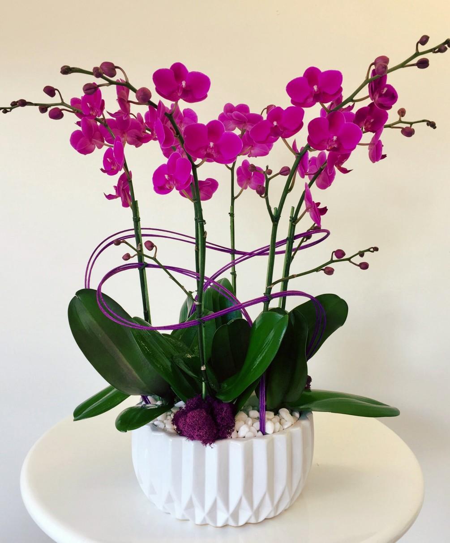 Saksıda Mor Orkideler