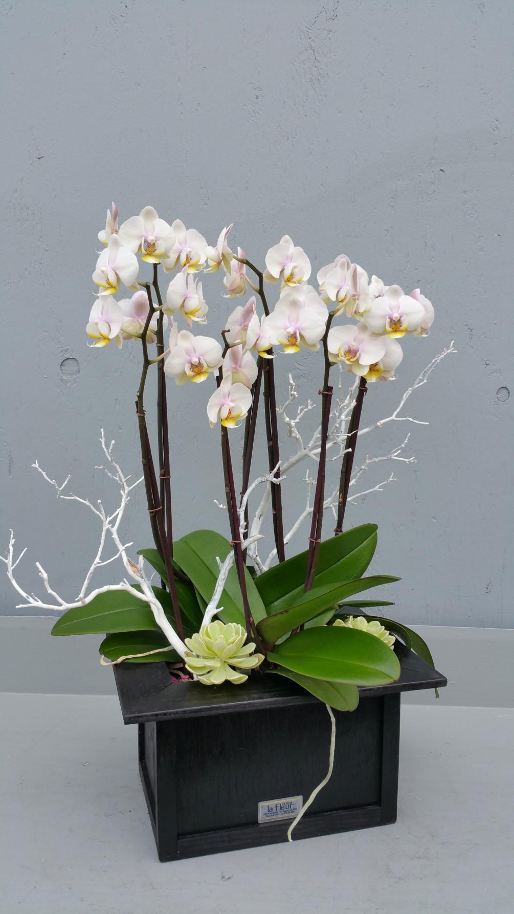 Beyaz Orkideler