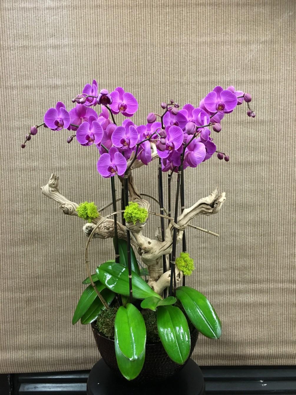 Mor Orkide Aşkına