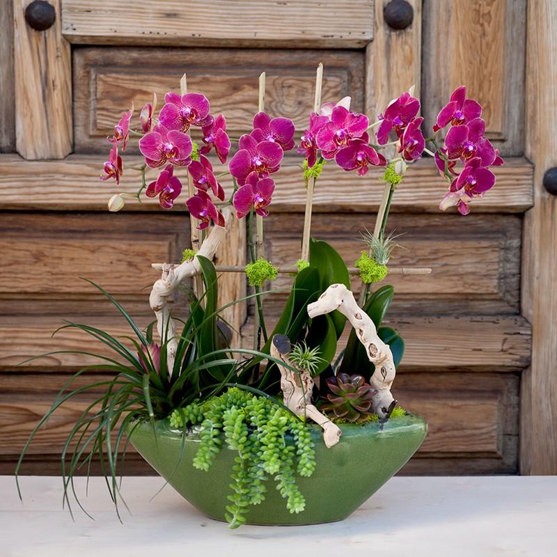 Şık Saksıda Pembe Orkideler