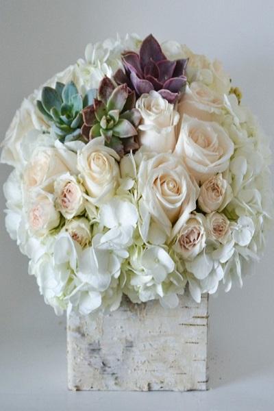 Beyaz Güller Sukullent