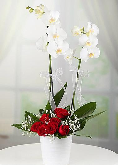 Çift Dal Beyaz Orkide & Kırmızı Gül Arajmanlı