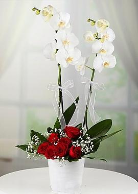 Orkide ve Kırmızı Güller