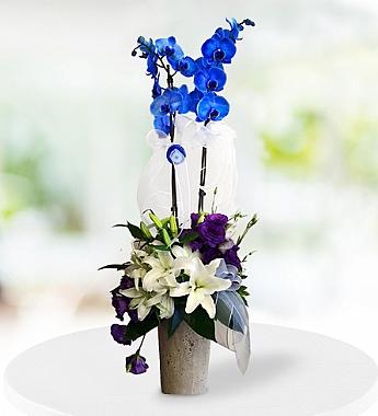 Mavi Orkide ve Lilyumlar