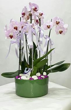 Lila Orkide Bahçesi