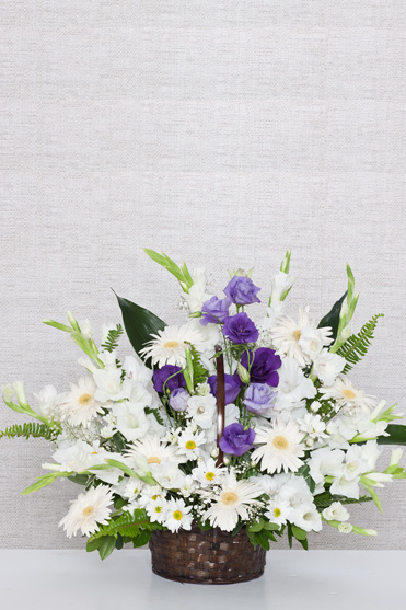 Bebek Çiçekleri