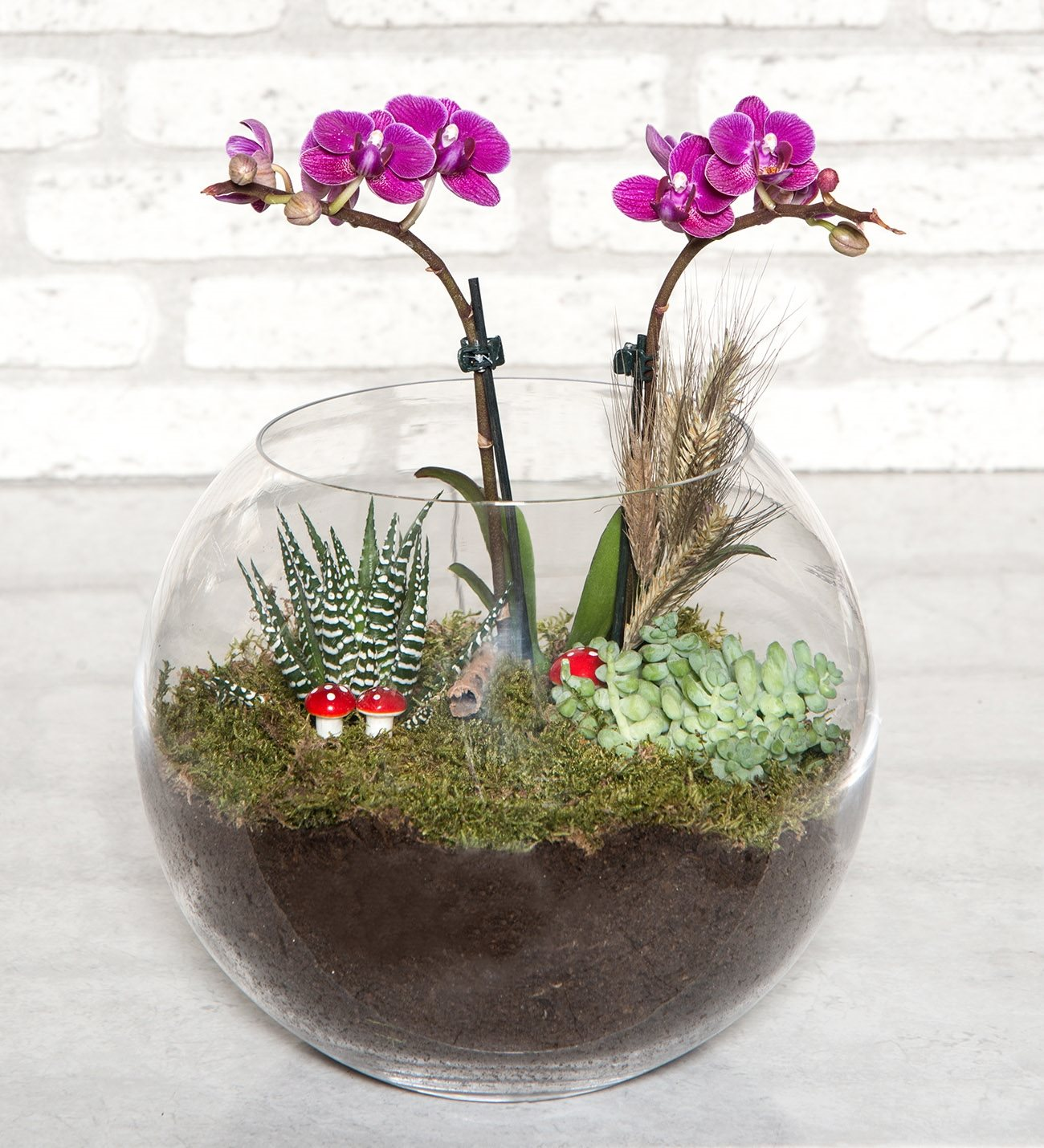 mini orkide ve teraryum
